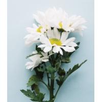 Terfi Tebrik Çiçeği